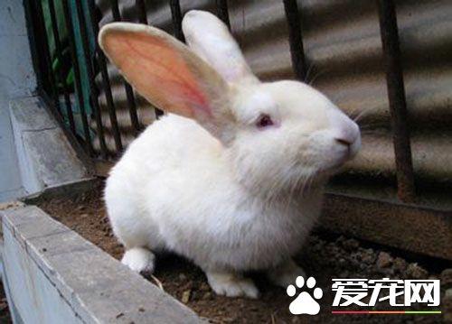 养兔子的注意事项 每天都需要和兔子玩耍